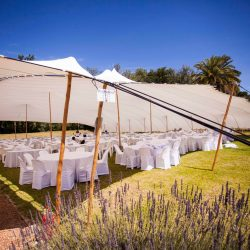 wedding lavender